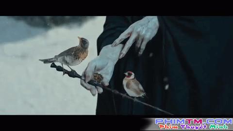 Cạn lời với chuyện tình của Người Đẹp và Quái Vật Hắc Ám Voldemort - Ảnh 7.
