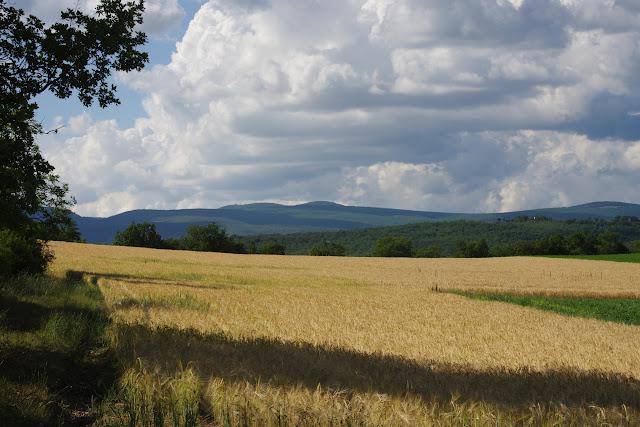 Les Hautes-Courennes, Saint-Martin-de-Castillon (Vaucluse), 15 juin 2015. Photo : J.-M. Gayman