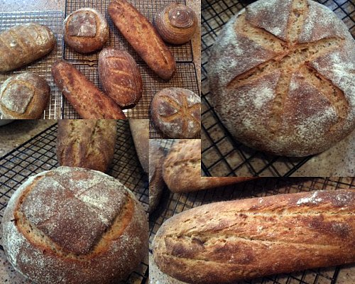 The Italian Love Affair with Wheat: Whole Wheat Kamut Sourdough Loaves
