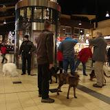 KNON puppys in de stad nov 2008 - DSC09024.JPG