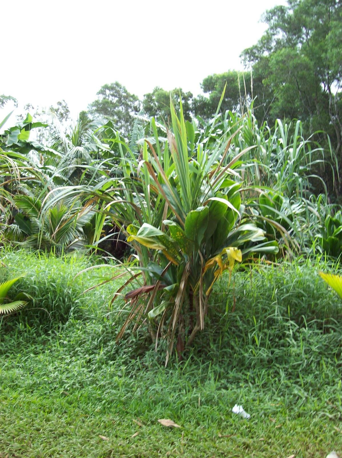 Hawaii Day 5 - 100_7336.JPG