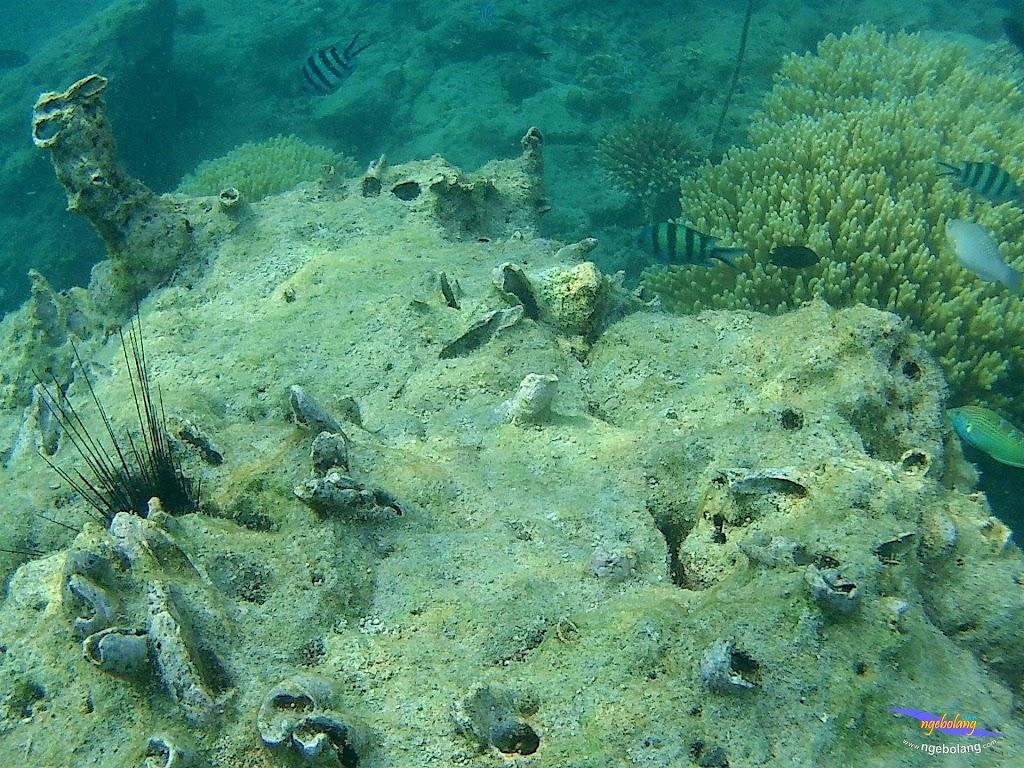 pulau pari 050516 GoPro 63