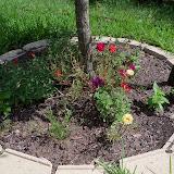 Gardening 2010, Part Three - 101_5048.JPG
