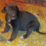 Available black female @ 4 weeks