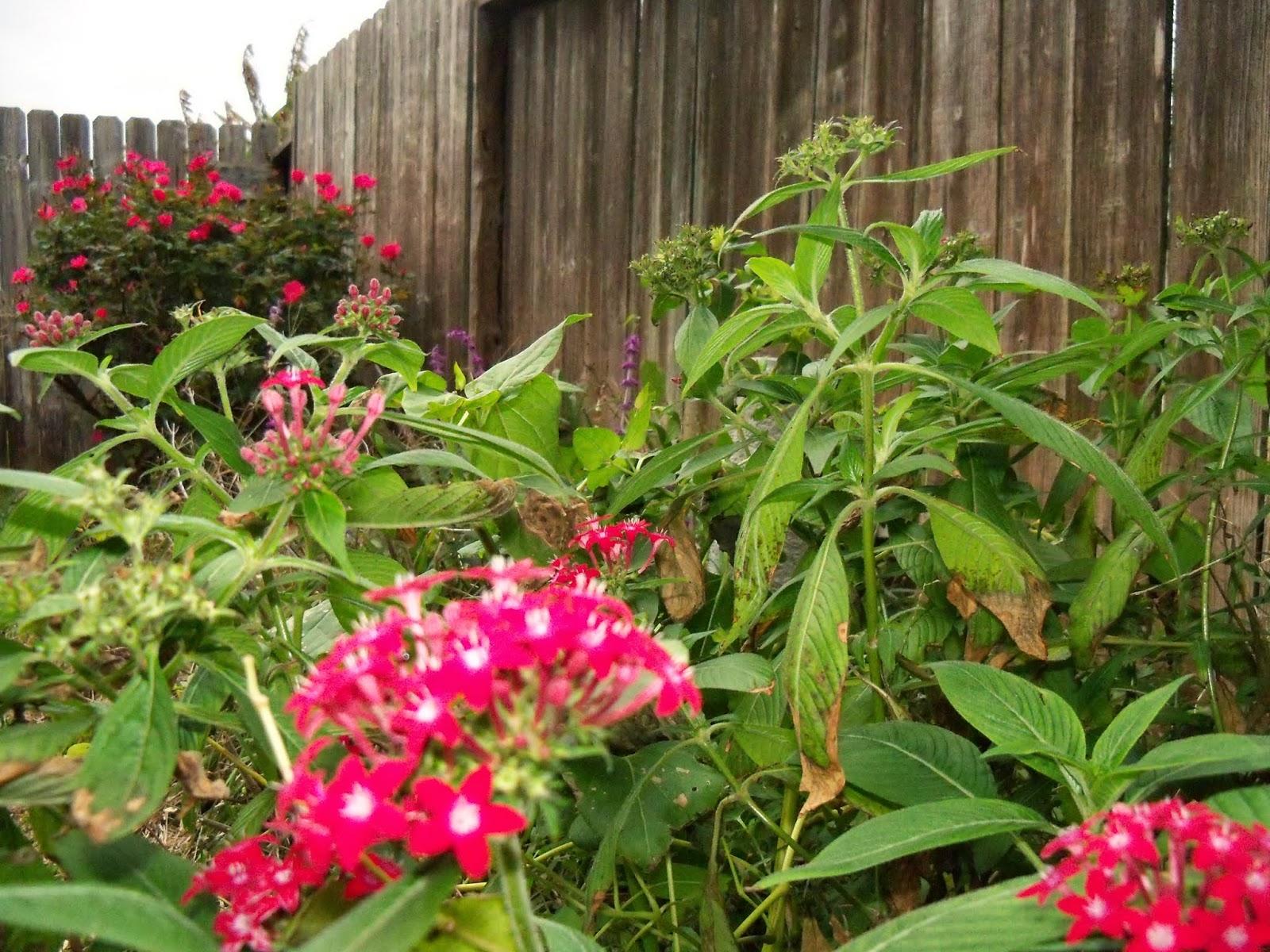 Gardening 2014 - 116_6263.JPG