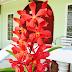 Orkid Lama Berbunga Lagi