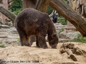 Photo: Schwarzbaerchen Knut untersucht den Sandhaufen ;-)