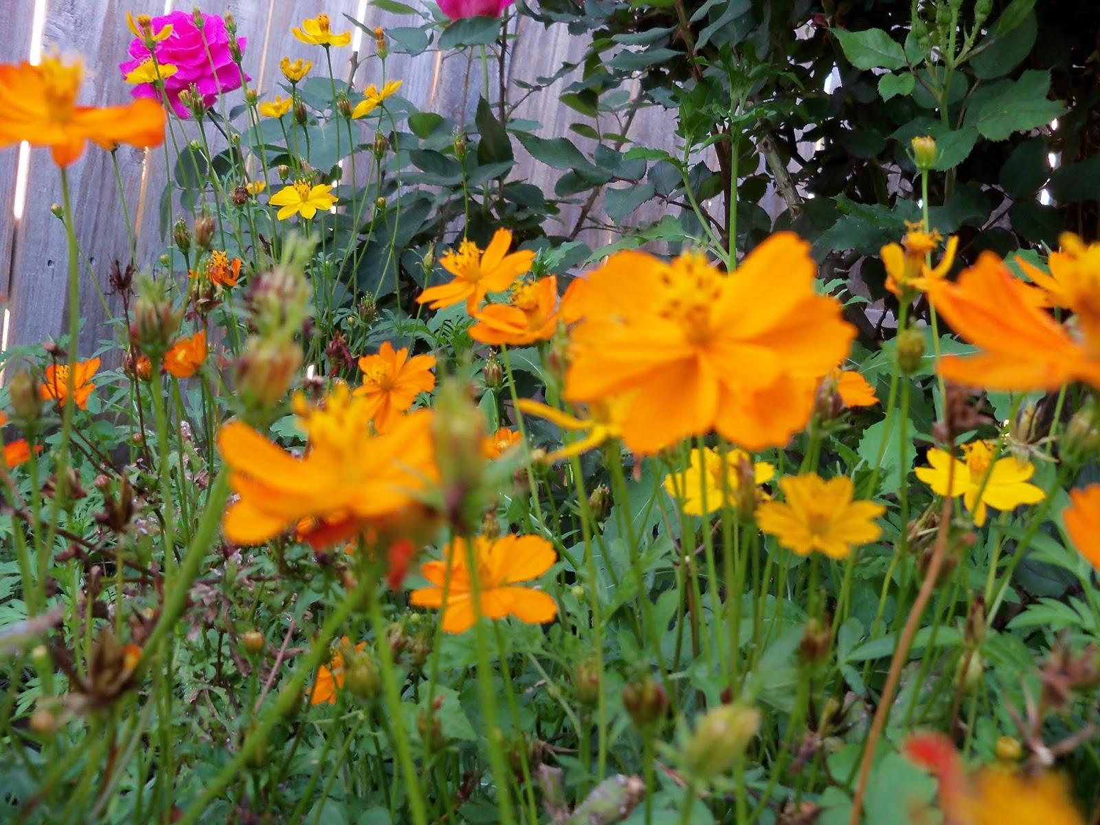 Gardening 2013 - 115_5389.JPG