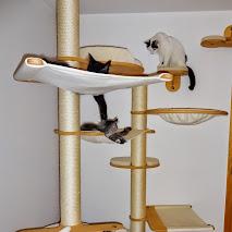 catwalk katzenkratzbaum system google. Black Bedroom Furniture Sets. Home Design Ideas