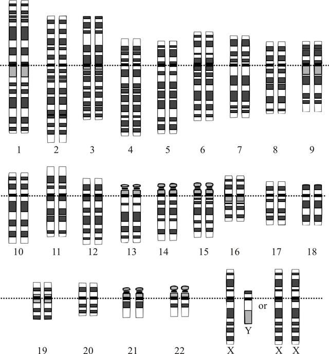Google Genomics