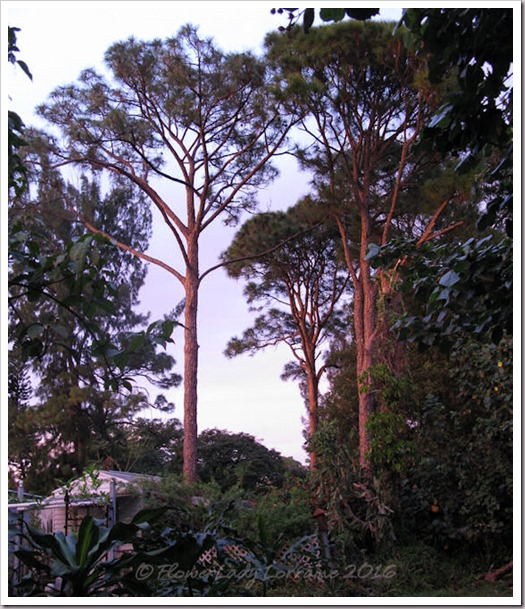 12-30-sunset-lit-trees