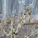 Gardening 2009 - 101_5123.JPG