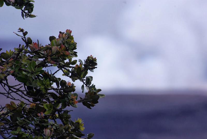 06-20-13 Hawaii Volcanoes National Park - IMGP5231.JPG