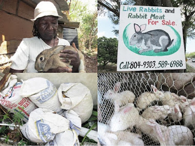 My Thoughts on Technology and Jamaica: How St  Thomas Rabbit