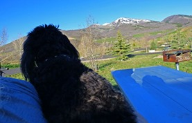 Skruffy moves to lap, Frosty morning, Lake Jordanelle State Park