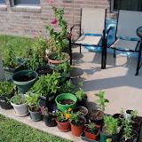Gardening 2011 - 100_9449.JPG