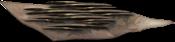 Aculeo di Knarl