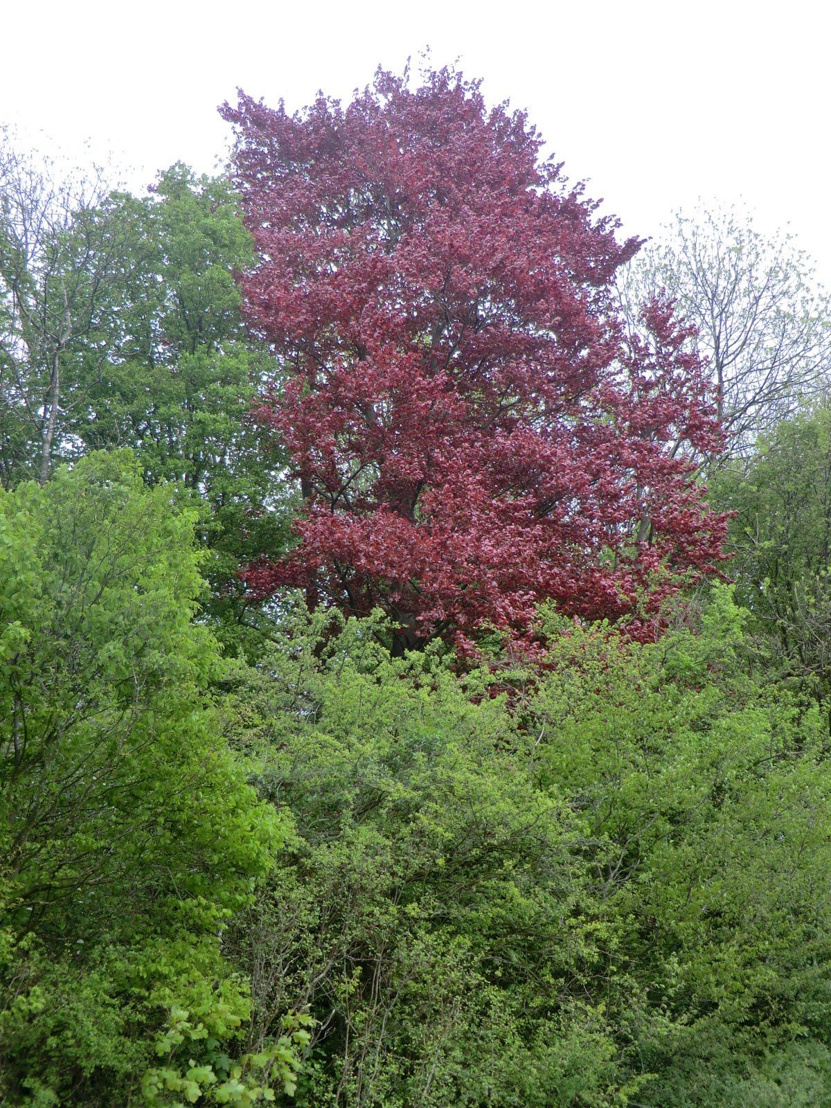 CIMG2922 Selsdon Wood