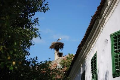 Störche in Viscri