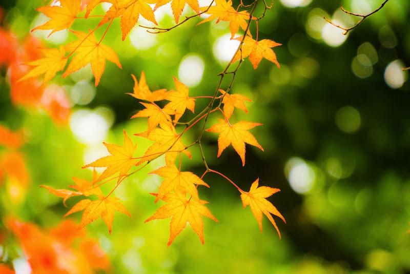 京都 銀閣寺 紅葉 写真7