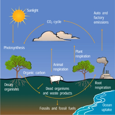 Oxygen And Carbon Dioxide Cycle Simple Freshwater Ecology: Ox...