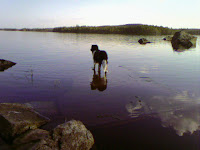 Hund ej rädd för vatten