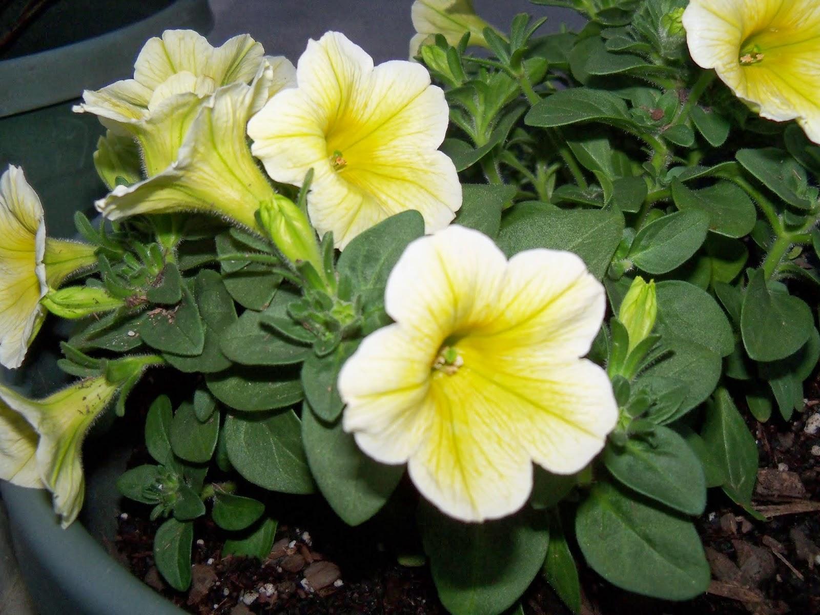 Gardening 2014 - 116_1149.JPG