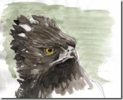 Alec Earnshaw-Sketch_Black_Hawk-Eagle_th