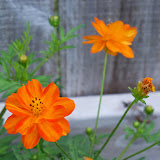 Gardening 2011 - 100_8238.JPG