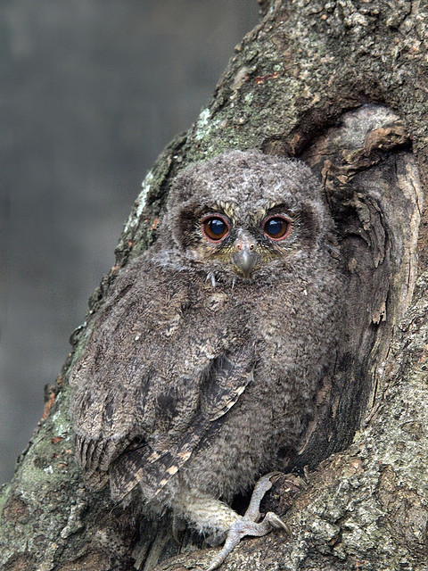 Bird Photos Nature Photography