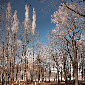 Surreal Trees by Eduard Moise - Landscapes Forests ( infrared, wallpaper, dreamscape, dramatic, trees, forest, surreal )