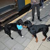 KNON-honden in Emmen - DSC_0773.JPG