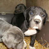 Star & True Blues February 21, 2008 Litter - HPIM1092.JPG