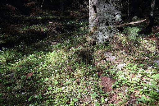 Rozkvitnutý les