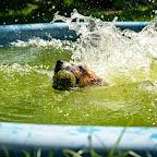 w basenie (1).jpg