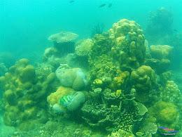 Pulau Harapan, 16-17 Mei 2015 GoPro  16