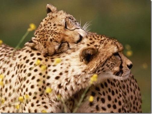 amor entre aniimales (47)