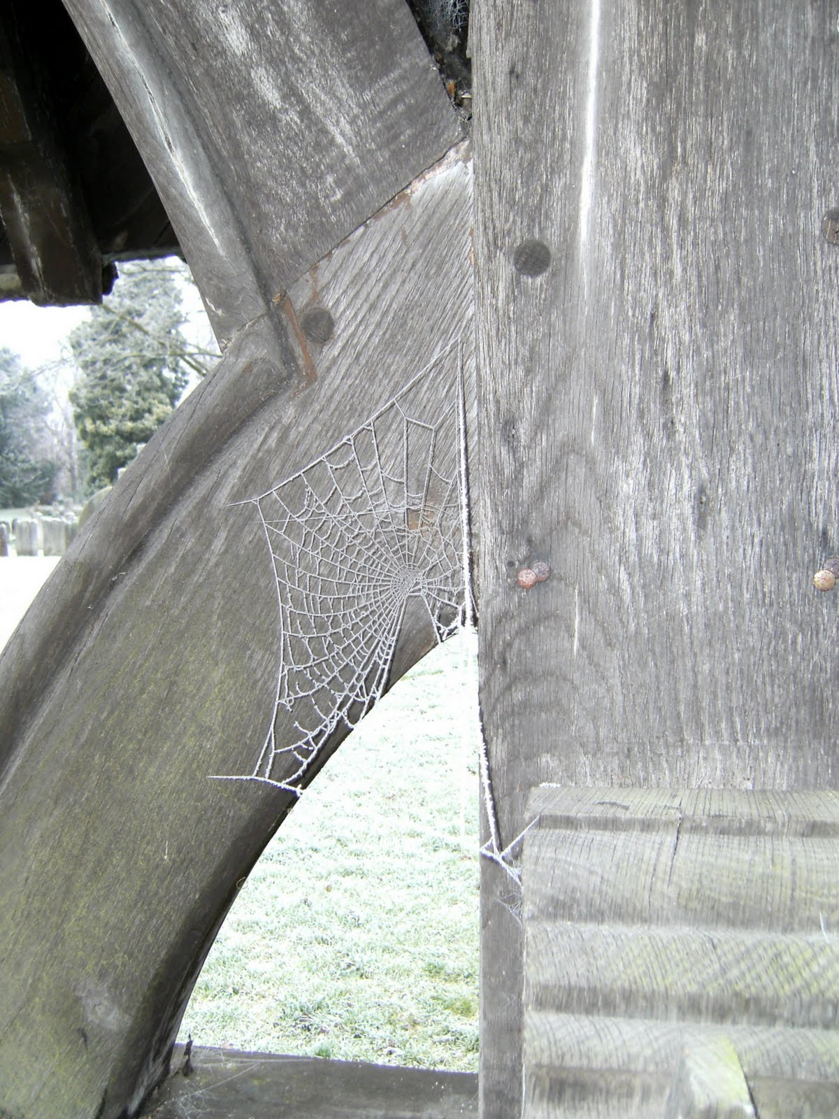 DSCF0016 Frosty spider's web, Betchworth