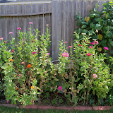 Gardening 2011 - 100_0069.JPG