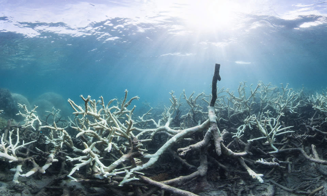Bleached coral at the Great Barrier Reef. In 2016, almost 93 percent of the Great Barrier Reef was suffering from bleaching, something some tourism operators are reluctant to publicise for fear of the potential impact on their industry. Photo: XL Catlin Seaview Survey / AFP / Getty Images