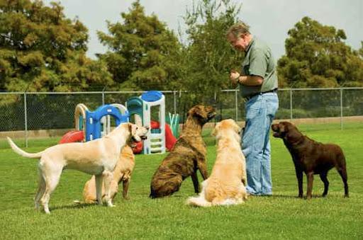 dog-training photo:dog training salem oregon