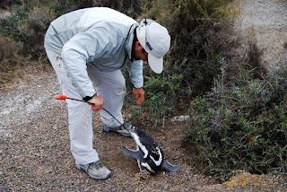 Biologistes_et_pingouins_6