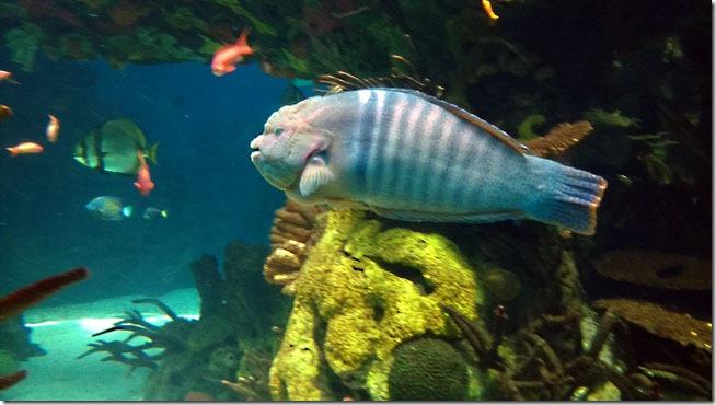 peixe-palhaco-oceanario-de-lisboa-5