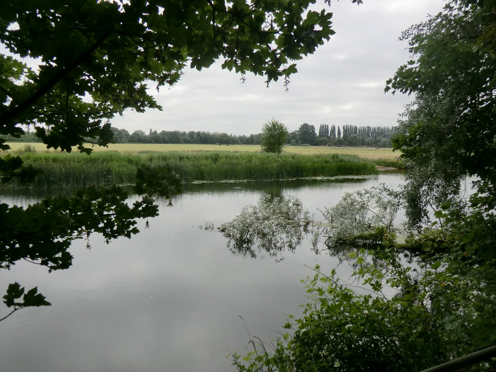 CIMG7885 Hemingford Grey Meadow across the river