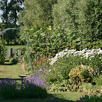 zomer tuin.JPG