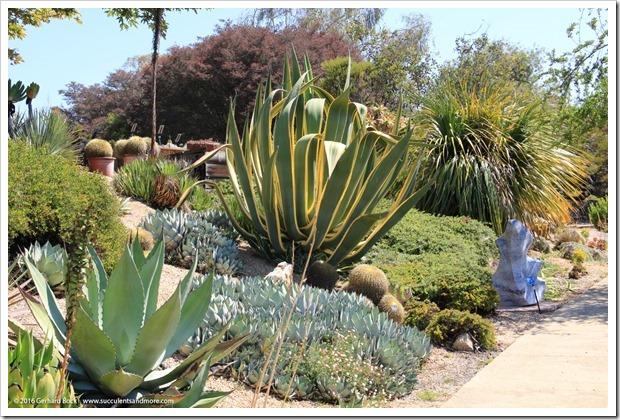 160813_UCSC_Arboretum_222