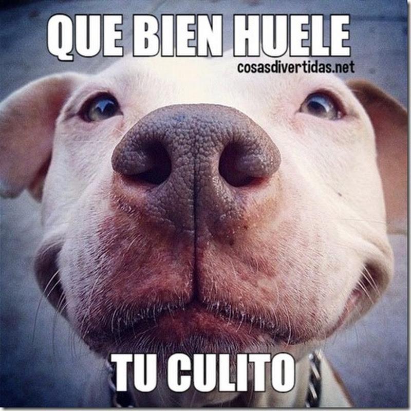 Memé humor perro enamorado