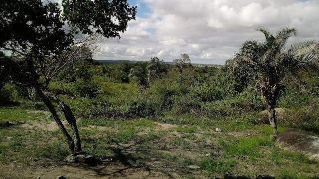 Resultado de imagem para vegetação de pernambuco