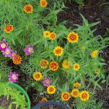 Gardening 2010, Part Three - 101_3749.JPG
