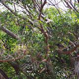 06-27-13 Spouting Horn & Kauai South Shore - IMGP9779.JPG